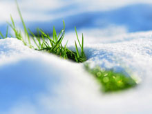 2015Nature___Seasons___Spring_Grass_makes_its_way_from_under_the_white_snow_099393_29
